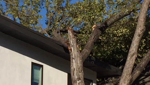 tree-limb-on-house